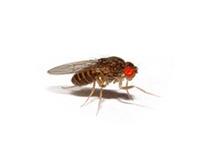 Vliegende Insecten bestrijden - ongediertebestrijding sneek