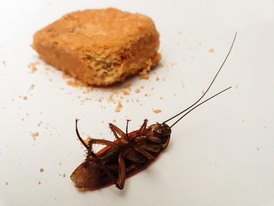 Kakkerlakken bestrijden