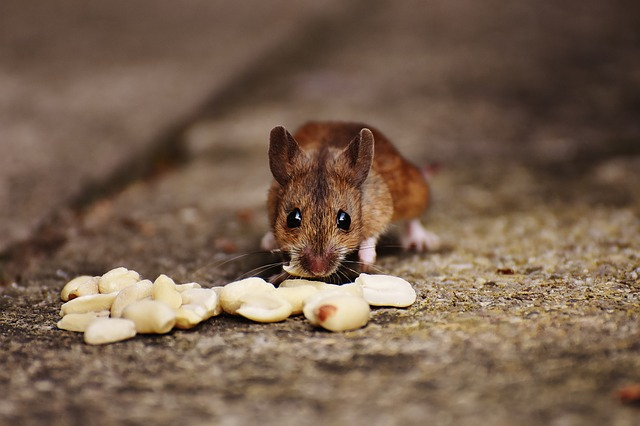 Muizenbestrijding schade en overlast